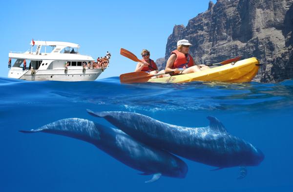 Kayak + avistamiento cetáceos