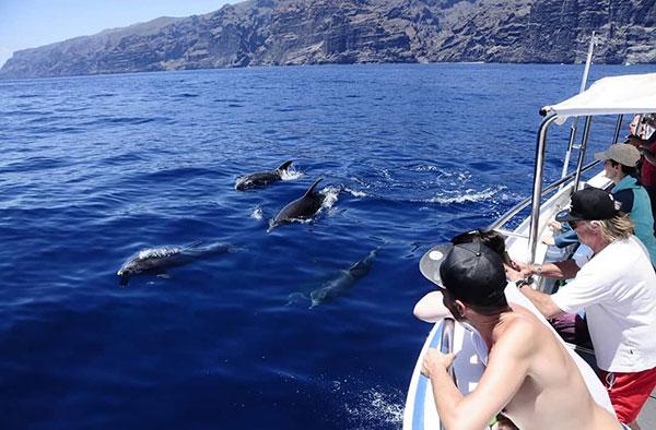 Barco Avistamiento de Cetáceos